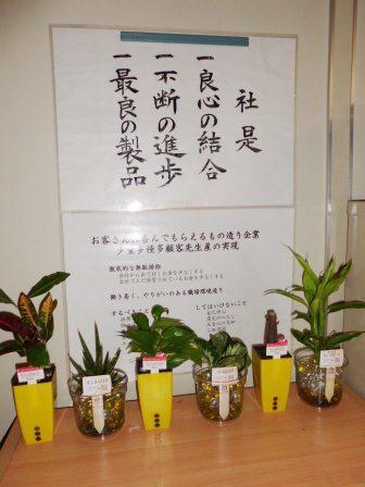 20120828tukuenoyoko